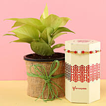 Jute Wrapped Money Plant & Pearl Rakhi: Plants Delivery Today
