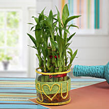 Love For Lucky Bamboo: Send Anniversary Gifts for Wife