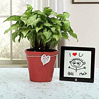 Love Is Everywhere: Valentine Plants