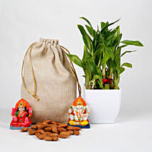 Lucky Bamboo Diwali Hamper: Send Plants n Dry Fruits