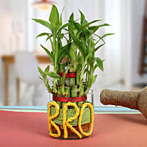 Lucky Bamboo For Brother: Spiritual Gifts for Bhai Dooj