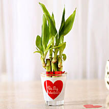 Lucky Bamboo In Be My Valentine Glass Vase: Bamboo Plants