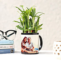 Lucky Bamboo in Personalised Black Mug: Send Plants For Fathers Day