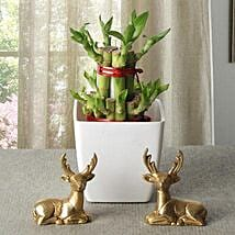 Lucky Bamboo With Deers: Potted Plants