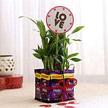 Lucky Bamboo with Love Tag & Dairy Milk Combo: Send Plants to Mumbai