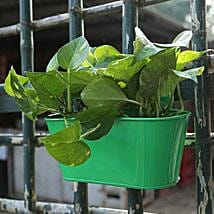 Lucky Green Money Plant: Garden Tools and Accessories