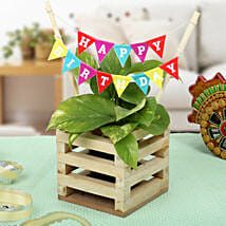 Make It Best Birthday Gift: Money Tree