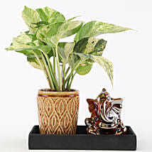 Marble Money Queen Plant In Ceramic Platter: Good Luck Plants for Boss Day