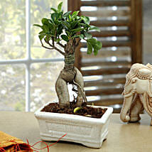 Marvellous Bonsai Plant: Send Plants to Chandigarh