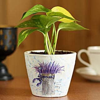 Money Plant In Purple Ceramic Pot: Plant Pots