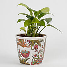 Money Plant in Stoneware Floral Pot: Money Plant