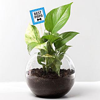 Money Plant Terrarium For Best Papa: Father's Day Plants