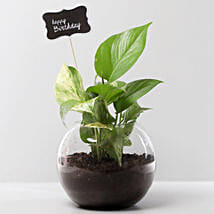 Money Plant Terrarium For Birthday: Good Luck Plants for Birthday
