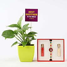 Money Plant With Red & White Rakhi: Send Rakhi to Jaipur