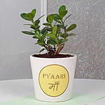 Mothers Day Special Ficus Dwarf Plant: Mothers Day Gifts to Ahmedabad