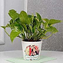 Mothers Day Special Money Plant: Gifts for Mother in Law