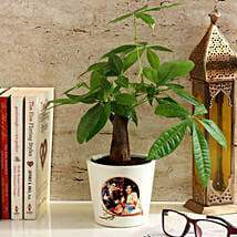 Pachira Bonsai in Personalised Photo Ceramic Pot: Bestselling Plants