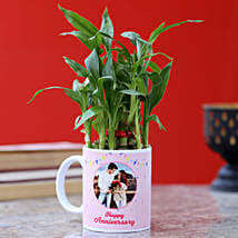 Personalised Anniversary Wishes Bamboo Plant: Lucky Bamboo to Noida