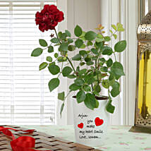 Personalised Red Rose Plant: Valentines Day Gifts Kota