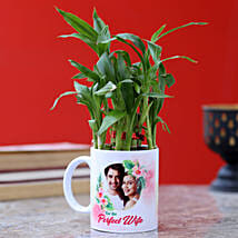 Personalised Two Layer Bamboo Plant For Wife: Send Lucky Bamboo to Noida