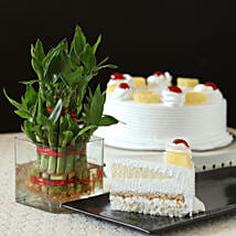 Pineapple Cake With Lucky Bamboo Plant: Send Lucky Bamboo for Teachers Day
