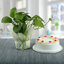 Pineapple Cake With Money Plant: Cakes N plants