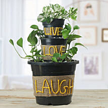 Pothos Dish Garden: New Arrival Gifts