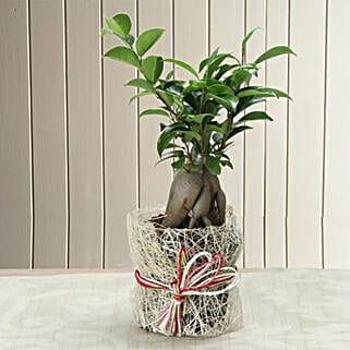 Potted Ficus Bonsai Plant: Home Decor items for Christmas