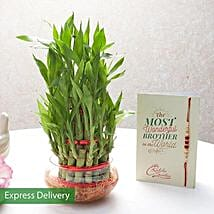Rakhi With Lucky Bamboo Plant: Send Lucky Bamboo to Ghaziabad