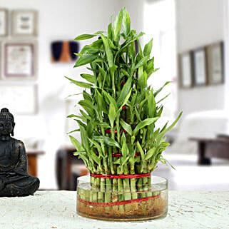 Ravishing 5 Layer Lucky Bamboo Plant: Lucky Bamboo to Pune