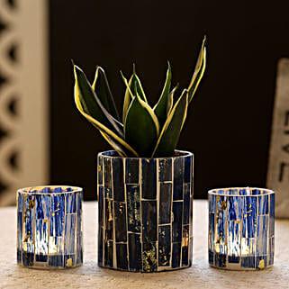 Sansevieria In Blue Mosaic Art Pot & 2 Votive Holders: Indoor Plants