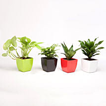 Foliage & Air Purifying Plant Set: Bhai Dooj Gifts Gurgaon