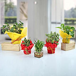 Set of 5 Fantastic Indoor Plants: Succulents and Cactus Plants