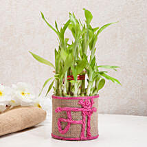 Sincerely Yours Mom Lucky Bamboo Plant: Send Plants for Mothers Day