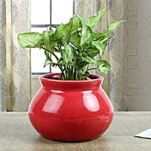 Syngonium Plant With Red Vase: Living Room Plants
