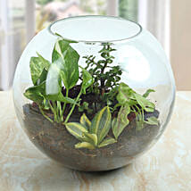 Terrarium For Healthy Air: Buy Indoor Plants