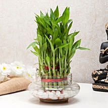 Three Layer Bamboo Good Luck Terrarium: Send Plants to Chennai