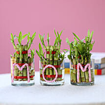 Three Lucky Bamboo Plants For Mom: Mothers Day Gifts to Bangalore