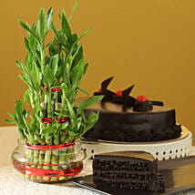 Truffle Cake N Three Layer Bamboo Plant: Good Luck Plants for Him