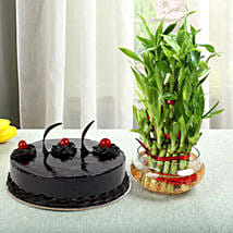 Truffle Cake N Three Layer Bamboo Plant: Gifts for Fiancee