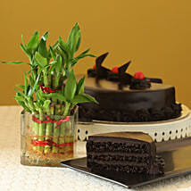 Truffle Cake N Two Layer Bamboo Plant: Cake Delivery In Charoda
