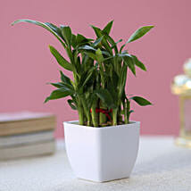 Two layer Bamboo Plant: Gifts to Rohtak