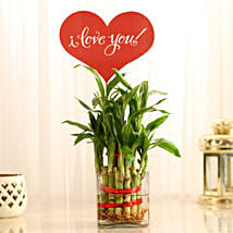 Two Layer Lucky Bamboo With I Love You Tag: Plants for Husband