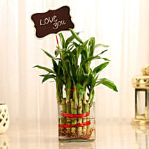 Two Layer Lucky Bamboo With Love You Tag: Valentines Day Lucky Bamboo