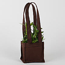 Two Layered Bamboo in Coffee Brown Bag: Lucky Bamboo for Teachers Day