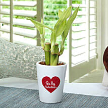 Valentine Love Bamboo Plant: Valentines Day Lucky Bamboo