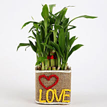 Valentine Special 2 Layer Lucky Bamboo In Love Vase: Plants to Pune