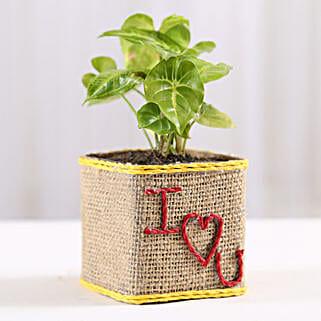 Syngonium Plant in I Love You Vase: Send Valentine Gifts to Delhi