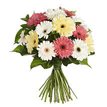 Daisy Gerbera Bouquet: Congratulations Flowers to New Zealand