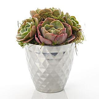 Designer Succulents: Flower Arrangements in New Zealand